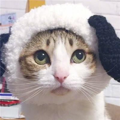 两个猫咪的情头大全2018_猫咪情侣头像一左一右可爱萌